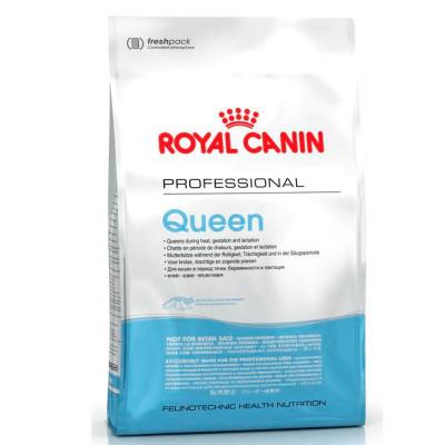 Сухой корм - Queen