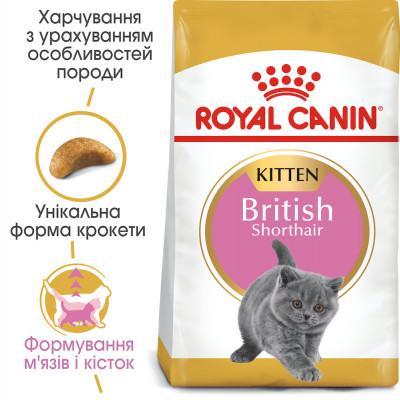 Сухой корм - British Shorthair Kitten