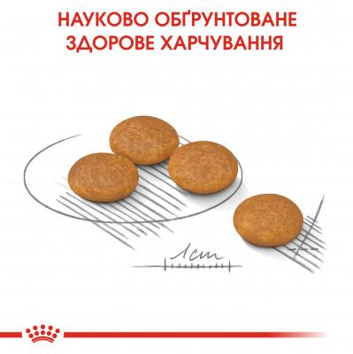 Сухой корм - Dermacomfort Mini