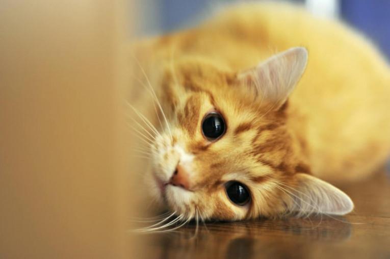 Как приучить к лотку кошку - основные правила