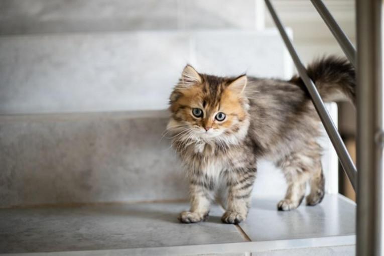 Догляд за кішкою