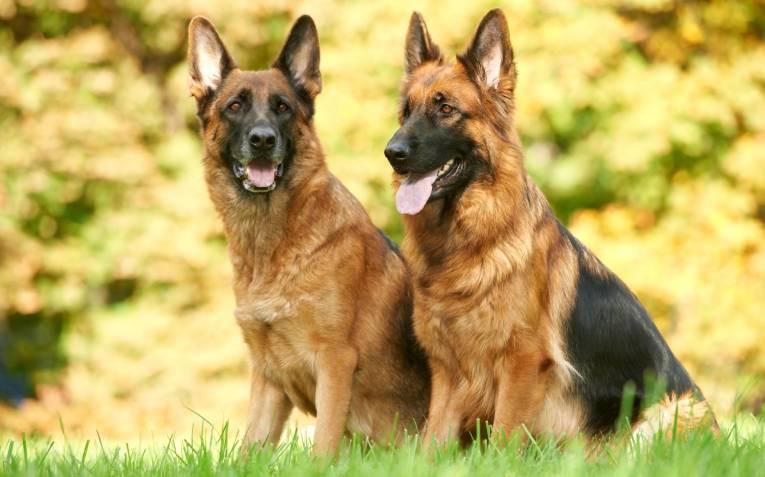 Собаки рятувальники на воді та в горах