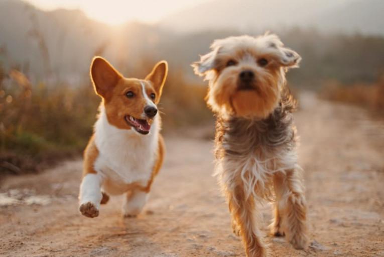 Советы по дрессировке собак