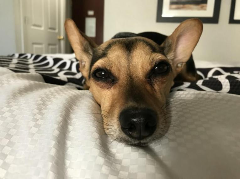Средства по уходу за ушами собак