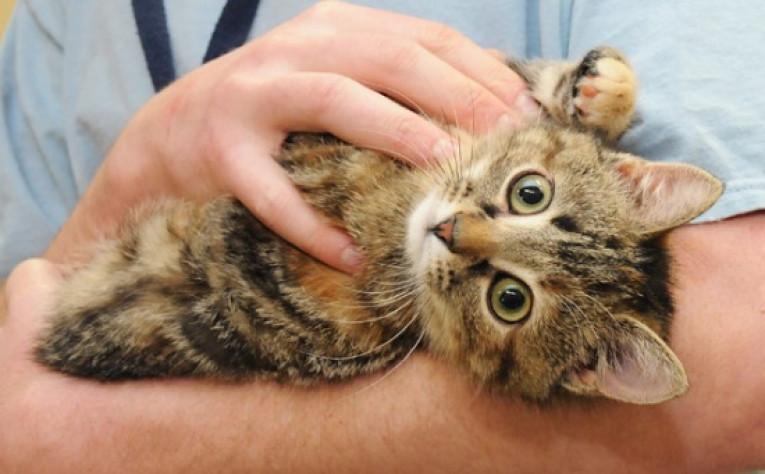 Алергія на котів і собак: причини, симптоми, як боротися?