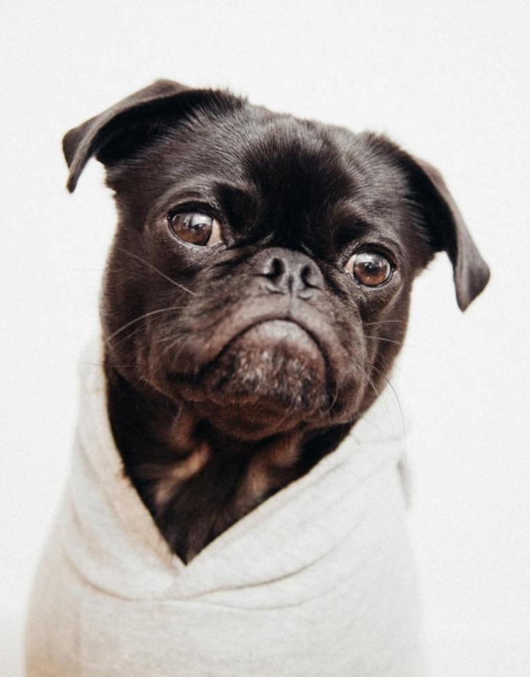 Види шампунів для собак