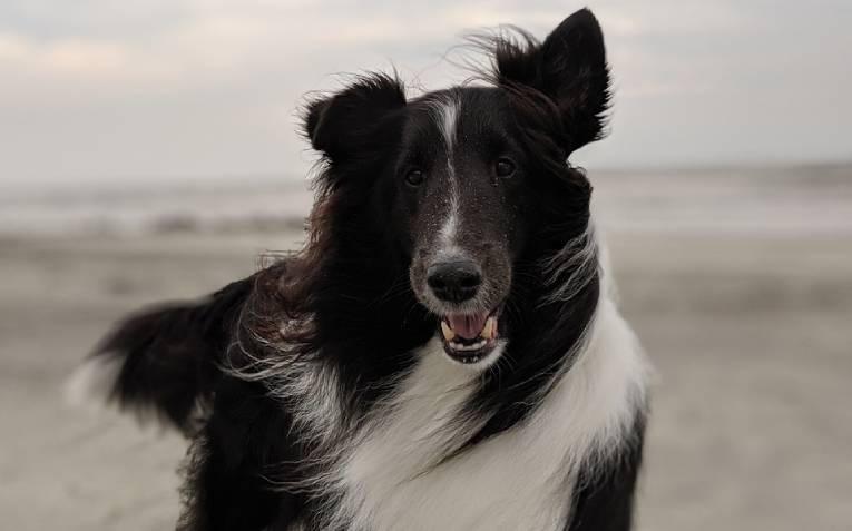 Виды шампуней для собак