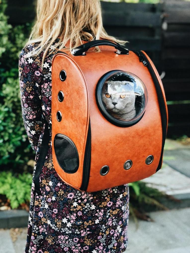 Правила транспортування домашніх тварин