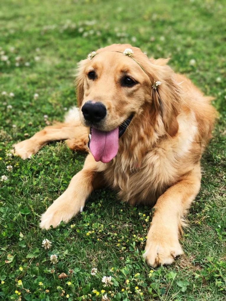 7 правил здорової собаки