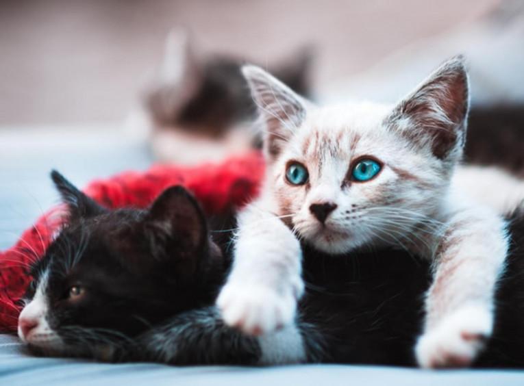 Кошка не ест: что делать?
