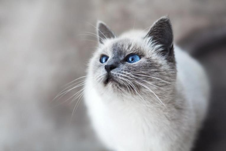 Кращі корми для кішок - рейтинг 2019 року
