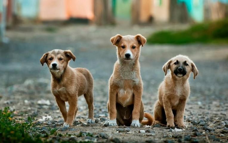 Как поднять аппетит у собаки?