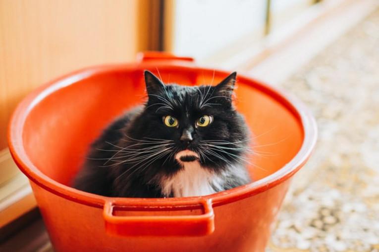 Чим не можна годувати кішку