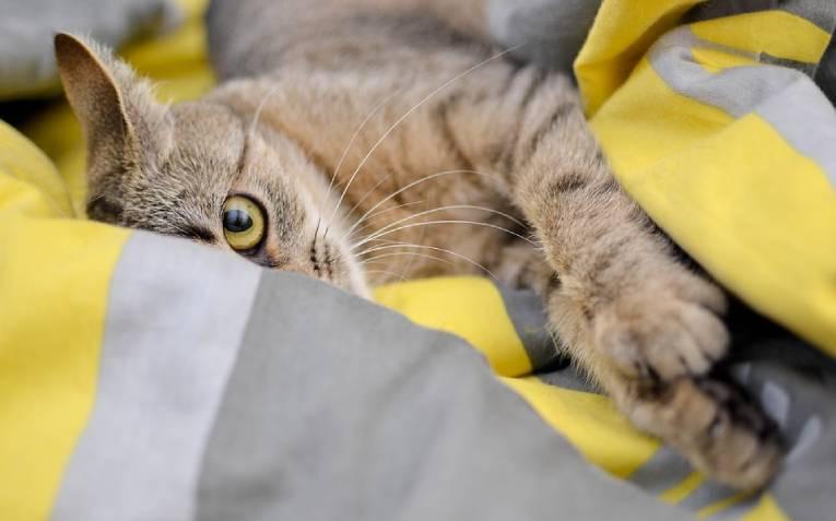 Как кошки выбирают с кем спать?