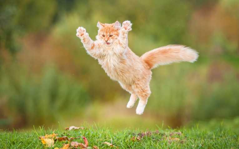 Поведение и характеры кошек