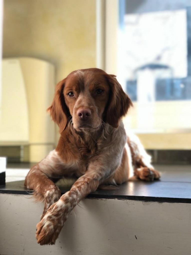 Догляд за собакою: поради досвідчених господарів