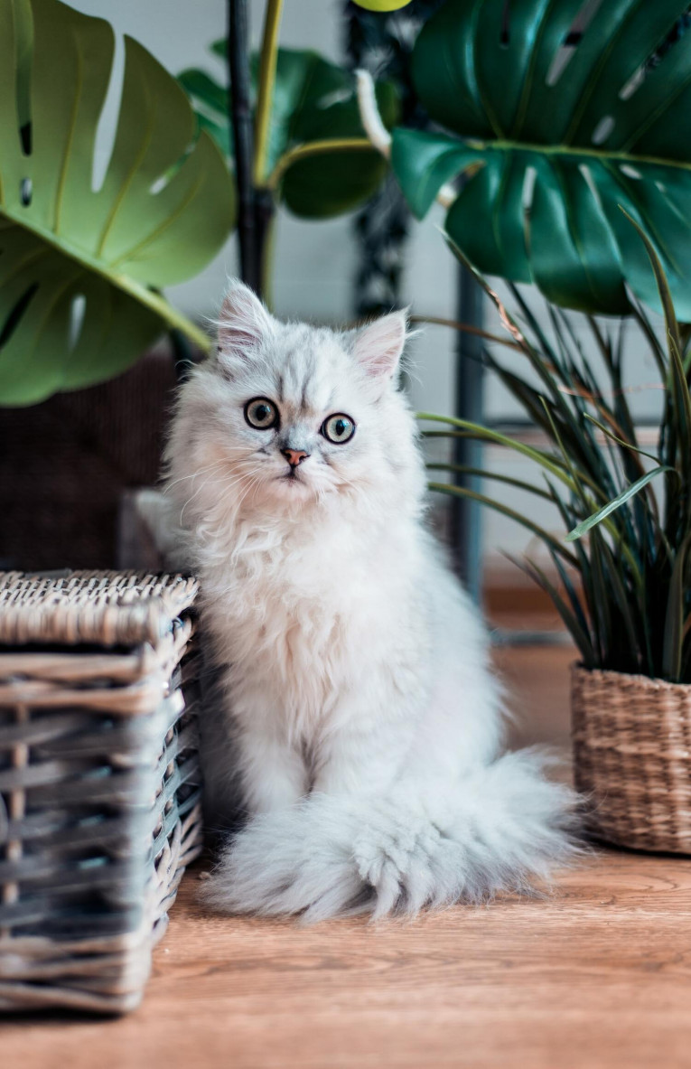 7 правил здорової кішки
