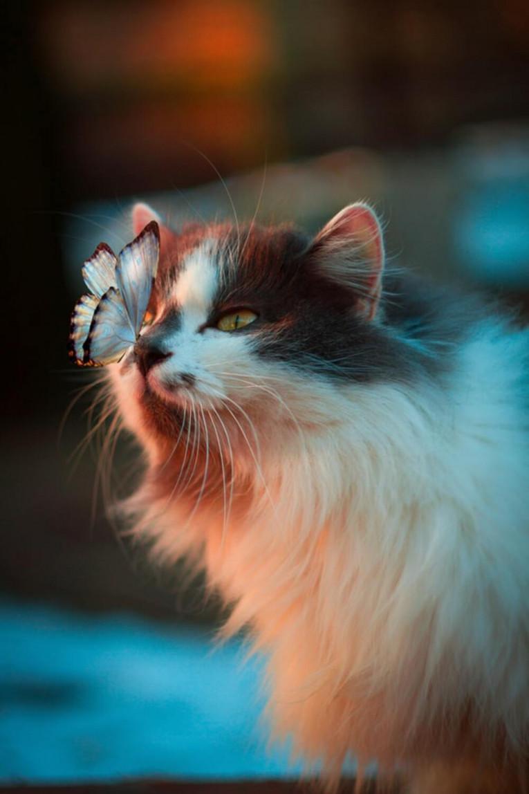 Чи потрібно міняти раціон харчування кішки після стерилізації?
