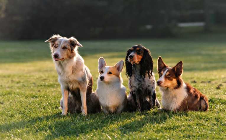 Классификация пород собак по размеру
