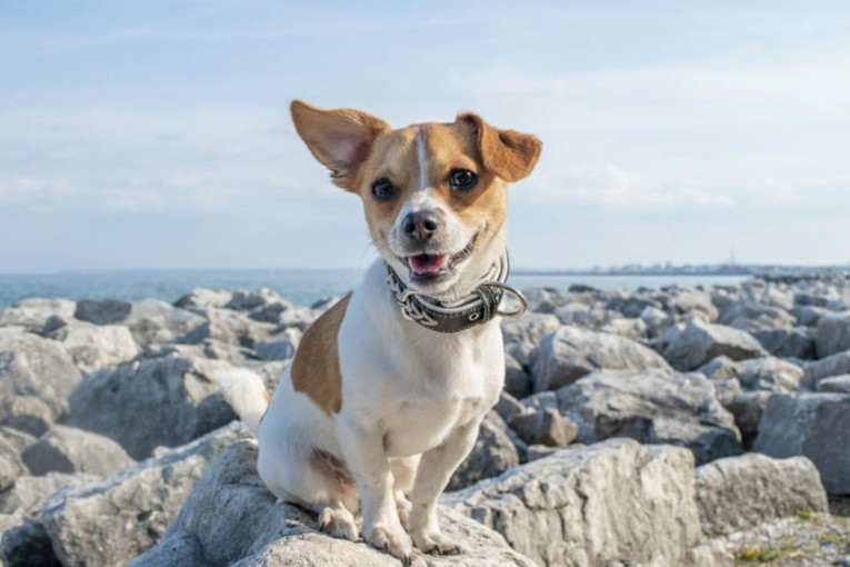 ТОП-10 самых умных собак, которые легко поддаются дрессировке