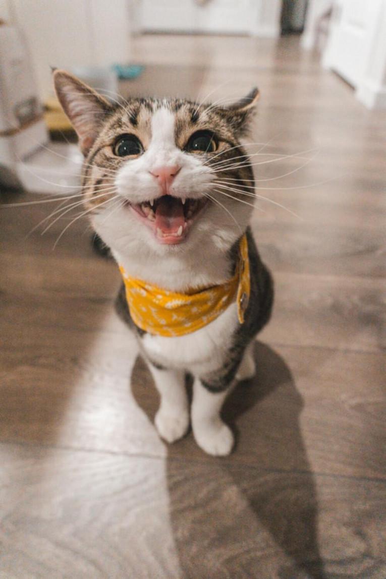 Какие бывают шампуни для кошек
